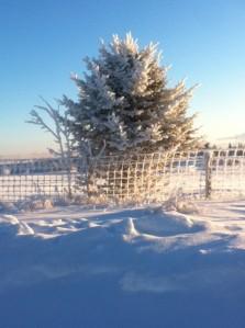 photo hoar frost